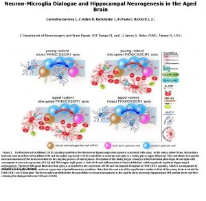 NeuronMicroglia Dialogue and Hippocampal Neurogenesis in the Aged
