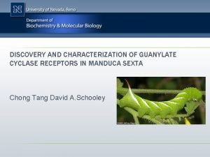 DISCOVERY AND CHARACTERIZATION OF GUANYLATE CYCLASE RECEPTORS IN