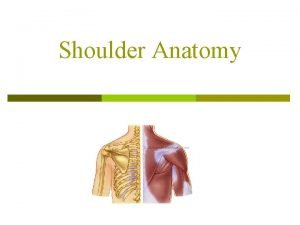 Shoulder Anatomy Shoulder It is a ball and