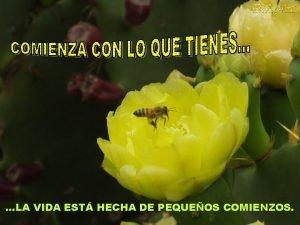 LA VIDA EST HECHA DE PEQUEOS COMIENZOS T
