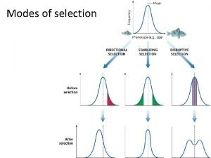 Modes of selection Stabilizing Selection Cumulative effects of