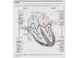 Le 4 fasi principali del ciclo cardiaco I