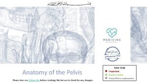 Anatomy of the Pelvis Please view our Editing