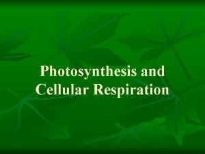 Photosynthesis and Cellular Respiration Outline I Photosynthesis A