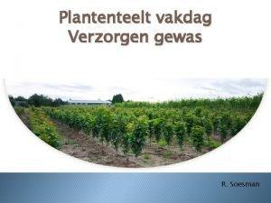 Plantenteelt vakdag Verzorgen gewas R Soesman Planning 1