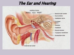The Ear and Hearing 1 Outer Ear main