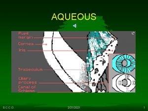 AQUEOUS S C C O 2212021 1 AQUEOUS