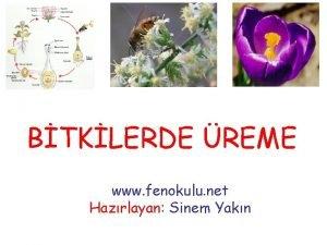 BTKLERDE REME www fenokulu net Hazrlayan Sinem Yakn