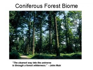 Coniferous Forest Biome The clearest way into the