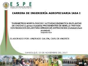 CARRERA DE INGENIERA AGROPECUARIA IASA I PARMETROS MORFOLGICOS