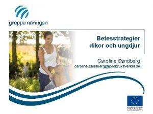 Betesstrategier dikor och ungdjur Caroline Sandberg caroline sandbergjordbruksverket