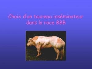 Choix dun taureau insminateur dans la race BBB