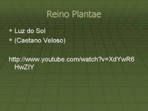 Reino Plantae Luz do Sol Caetano Veloso http