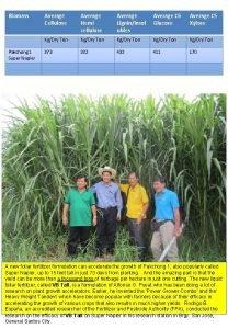 Biomass Pakchong 1 Super Napier Average Cellulose Average