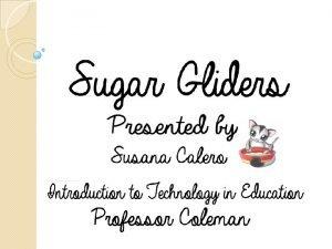Sugar Glider Scientific name being Petaurus breviceps is