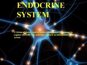 ENDOCRINE SYSTEM A system of glands each of