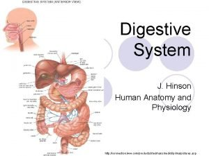 Digestive System J Hinson Human Anatomy and Physiology