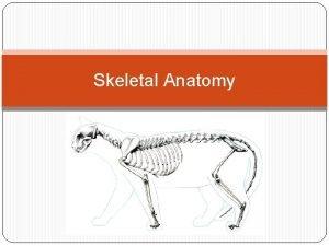 Skeletal Anatomy Skeletal System Axial Skeleton vs Appendicular