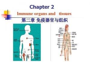 Chapter 2 Immune organs and tissues Immune organs