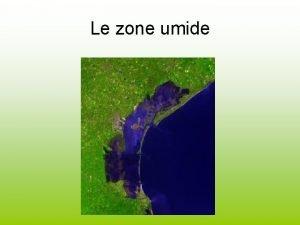 Le zone umide Azoto fosforo e solidi sospesi