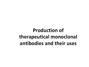 Production of therapeutical monoclonal antibodies and their uses