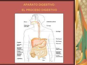 APARATO DIGESTIVO EL PROCESO DIGESTIVO GLNDULAS SALIVARES DENTADURA