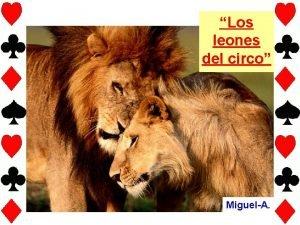 Los leones del circo MiguelA Cuentan en una