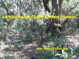 Artrpodos del Chaco Oriental Hmedo Dra Mara Esther