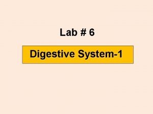 Lab 6 Digestive System1 Digestive tract Oral cavity