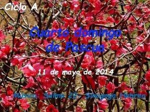 Ciclo A Cuarto domingo de Pascua 11 de