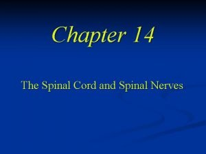 Chapter 14 The Spinal Cord and Spinal Nerves