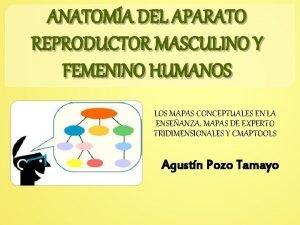 ANATOMA DEL APARATO REPRODUCTOR MASCULINO Y FEMENINO HUMANOS