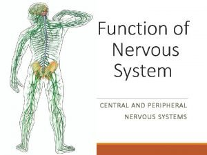 Function of Nervous System CENTRAL AND PERIPHERAL NERVOUS