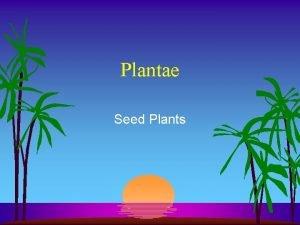 Plantae Seed Plants Vascular Plants Formation of vascular