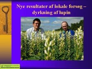 Nye resultater af lokale forsg dyrkning af lupin