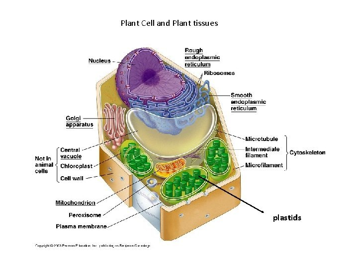 Plant Cell and Plant tissues plastids Cell wall