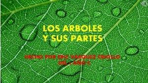 LOS ARBOLES Y SUS PARTES HECHO POR ERIC