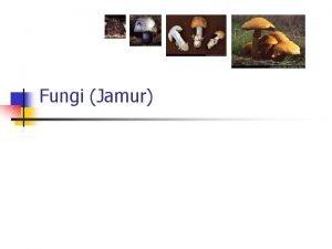 Fungi Jamur Ciri Jamur n Struktur dan Fungsi