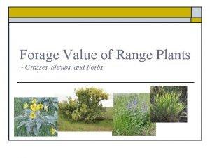 Forage Value of Range Plants Grasses Shrubs and