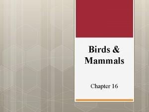 Birds Mammals Chapter 16 Section 1 Birds v