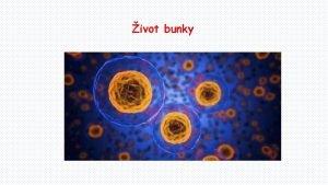 ivot bunky Medzi zkladn ivotn procesy bunky patria