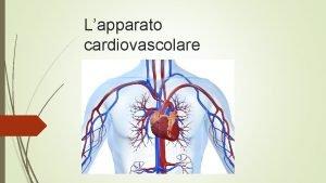 Lapparato cardiovascolare Lapparato cardiovascolare costituito da Sangue Vasi