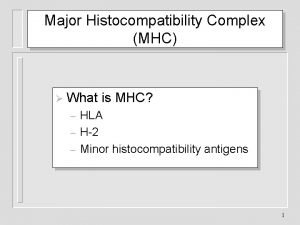 Major Histocompatibility Complex MHC What is MHC HLA