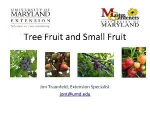 Tree Fruit and Small Fruit Jon Traunfeld Extension