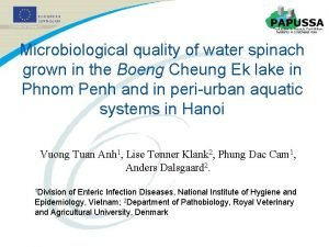 Microbiological quality of water spinach grown in the
