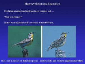 Macroevolution and Speciation Evolution creates and destroys new