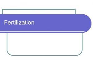 Fertilization Fertilization l Occurs in the ampullary region