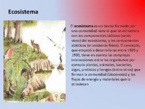Ecosistema El ecosistema es un bioma formado por