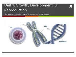 Unit 7 Growth Development Reproduction Asexual Reproduction Sexual
