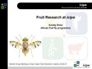 Fruit Research at icipe Sunday Ekesi African fruit